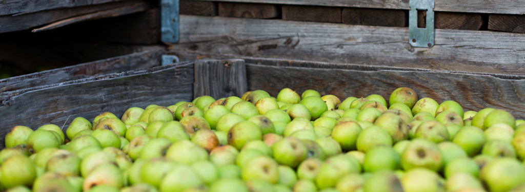 Tieton Cider Works Green Apples